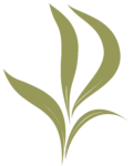 Decadt – Verhelst Plantenkwekerij